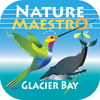 Nature Maestro - Glacier Bay Icon